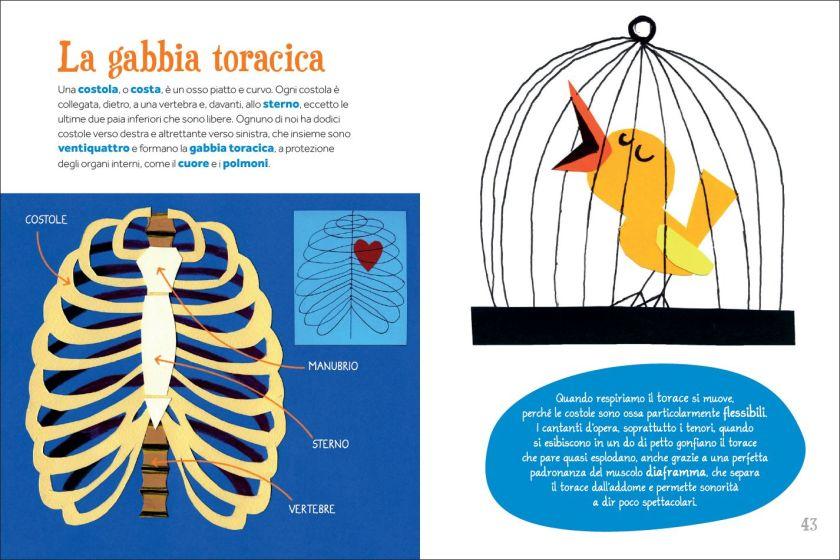 Gabbia_toracica